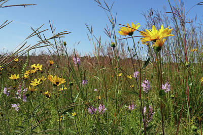 Photograph - August Prairie by Scott Kingery