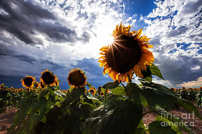 Photograph - August Sky by Jim Garrison