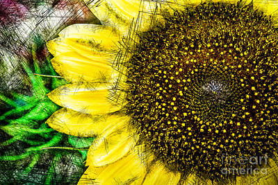 Photograph - August Sunflower 1 by Michael Arend