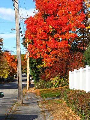 Photograph - Augusta Autumn by Bill Tomsa