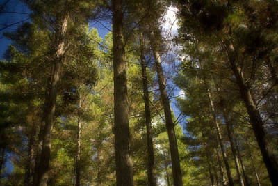Aupouri Forest Print by Graham Hughes