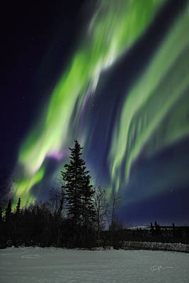Conifer Tree Photograph - Aurora Grasp by Ed Boudreau