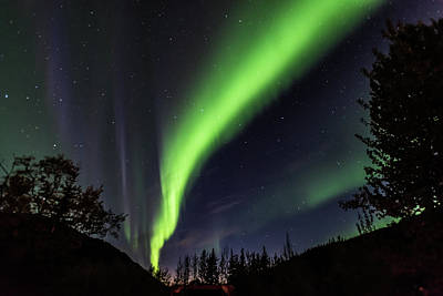 Photograph - Aurora Borealis, Norther Lights In Denali National Park by Brenda Jacobs