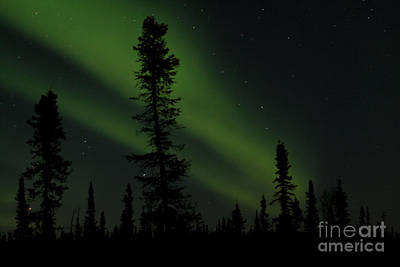 Aurora Borealis The Northern Lights Interior Alaska Art Print by Sharon Mau