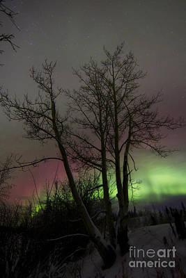 Twin Lakes Photograph - Aurora Borealis With Tree, Twin Lakes by Joseph Bradley