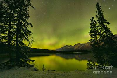 Photograph - Aurora Over The Forest by Adam Jewell