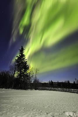 Conifer Tree Photograph - Aurora Rush by Ed Boudreau