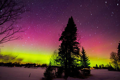 Aurora With Spruce Tree Art Print