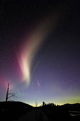 Photograph - Auroral Phenomonen Known As Steve 2 by Jean Clark