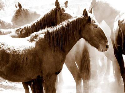 Photograph - Wild Horses - Australian Brumbies 3 by Lexa Harpell