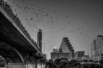 Lady Bird Lake Photograph - Austin Bat Watch Black And White by Tod and Cynthia Grubbs