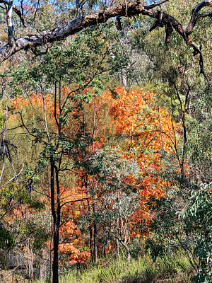 Photograph - Australian Bush Autumn 2 by Steven Ralser