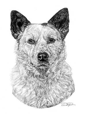 Cattle Dog Drawing - Australian Cattle Dog by Dan Pearce