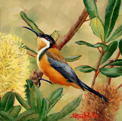 Painting - Australian Eastern Spinebill  by Margaret Stockdale