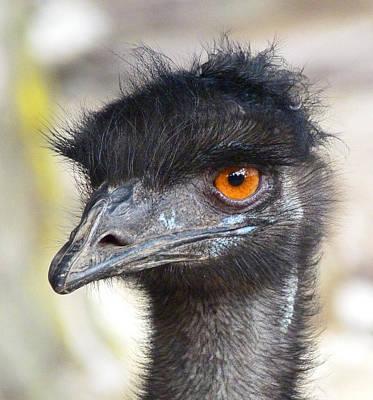 Photograph - Australian Emu Portrait by Margaret Saheed
