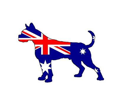 Australian Flag - Boxer Art Print