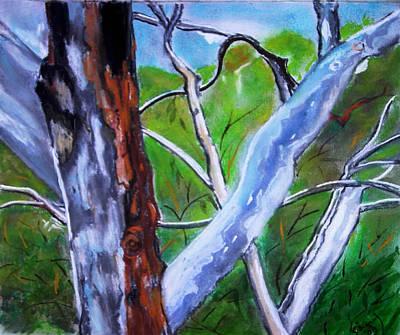 Australian Gum Trees Art Print