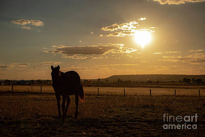 Photograph - Australian Horse In A Country Paddock. by Rob D