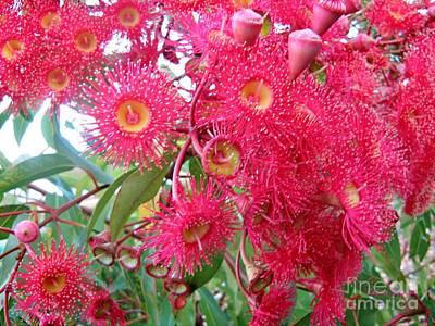 Photograph - Australian Native Blossoms by Leanne Seymour