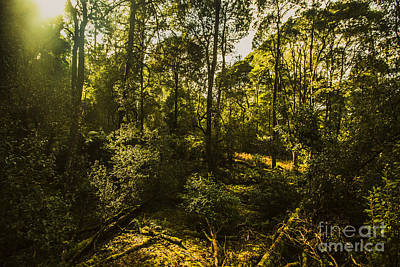 Forest Floor Photograph - Australian Rainforest Landscape by Jorgo Photography - Wall Art Gallery