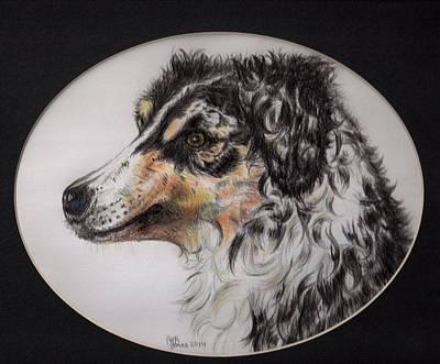 Drawing - Australian Shepherd Della Mae by Chris Bajon Jones