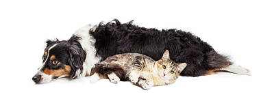Australian Shepherd Dog And Cat Laying Together Art Print by Susan Schmitz