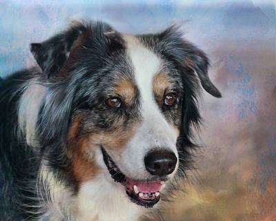 Photograph - Australian Shepherd - Dog by Nikolyn McDonald