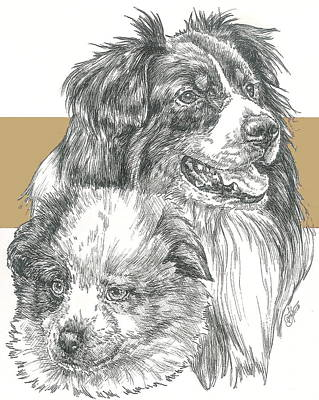 Herding Dog Mixed Media - Australian Shepherd Father And Son by Barbara Keith