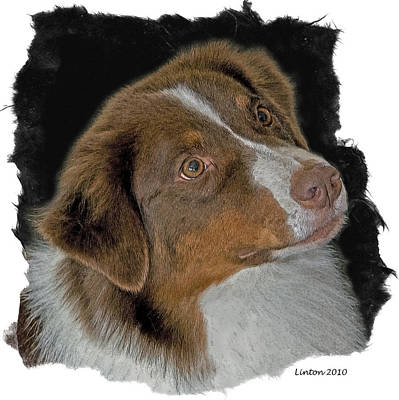Breed Digital Art - Australian Shepherd by Larry Linton