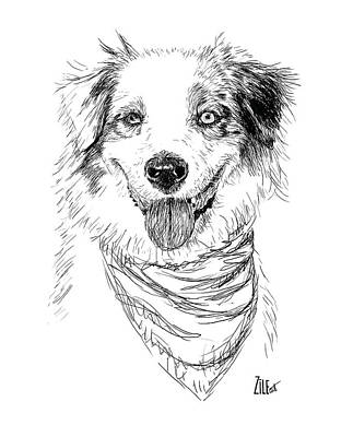 Digital Art - Australian Shepherd @pandora_the_aussie by ZileArt
