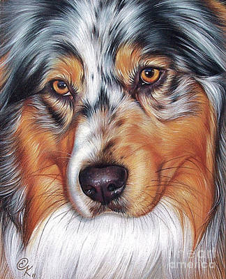 Dog Close-up Drawing - Australian Shepherd by Elena Kolotusha