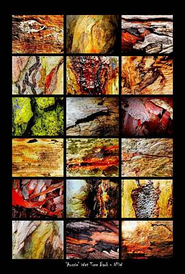 Photograph - Australian Tree Bark - In The Wet by Lexa Harpell