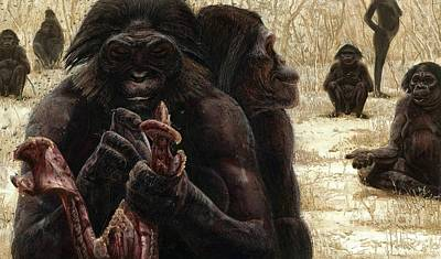 Reconstruction Photograph - Australopithecus Culture by Kennis & Kennis/MSF