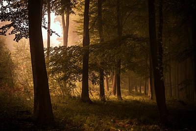 Autumn Photograph - Autumn Forest by Ian Hufton