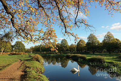 Photograph - Autum At Bushy Park London by Julia Gavin