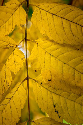 Photograph - Autumn Brilliance by James Woody