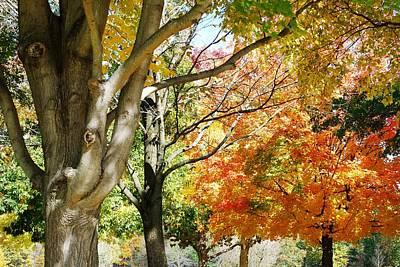 Autum Photograph - Autum Canopy by Peter  McIntosh