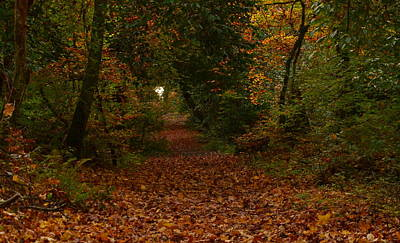 Photograph - Autum In Killarney National Park by Barbara Walsh