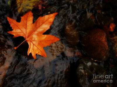Photograph - Autumn In The Rain by Lexa Harpell
