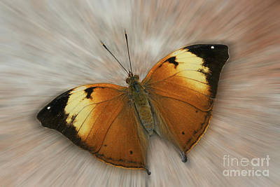 Autumn Leaf Butterfly Zoom Art Print