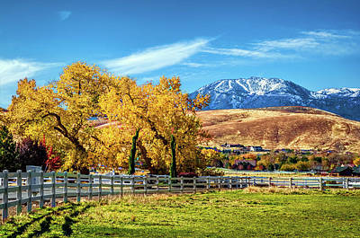 Photograph - Autum Pasture by Maria Coulson
