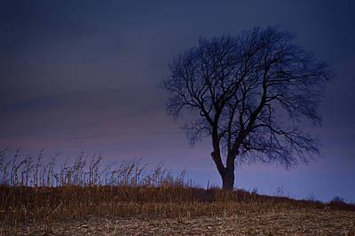 Photograph - Autum Tree by CA  Johnson