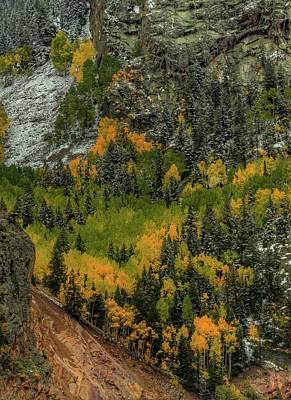 Aspen Trees Photograph - Autumn Grace by Bill Sherrell