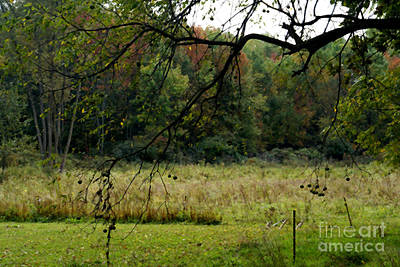 Photograph - Autumn - 2 by Linda Shafer