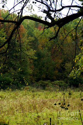 Photograph - Autumn - 3 by Linda Shafer
