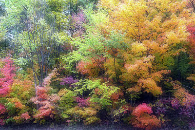 Photograph - Autumn 2 - 16oct2016 by Jim Vance