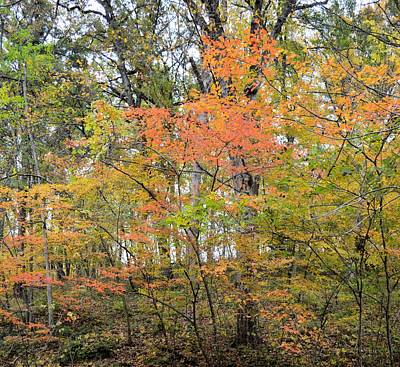 Photograph - Autumn 2 by Bonfire Photography