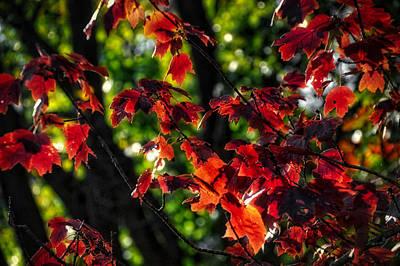 Digital Art - Autumn 2014 by Thomas Woolworth