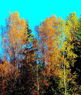 Photograph - It's Getting Colder Every Day And Soon It Will Be Winter Again    by Hilde Widerberg