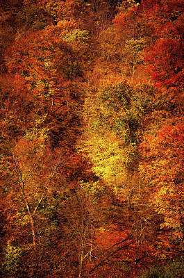 Photograph - Autumn Abstract. Beech Trees Forest 1 by Jenny Rainbow
